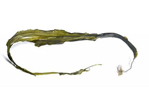 网传有些紫菜是塑料袋 实验破解谣言